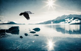 raven-flying-over-sunlit-icy-water