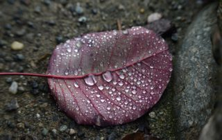 leaf-on-stony-ground-with droplets of rain