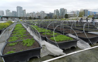 urban-farm-containers-and-hoops-with-cityscape-in-background-Vancouver-Canada